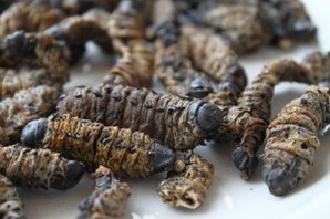 Mopane worms aren't quite so pretty once they're dead and dried.